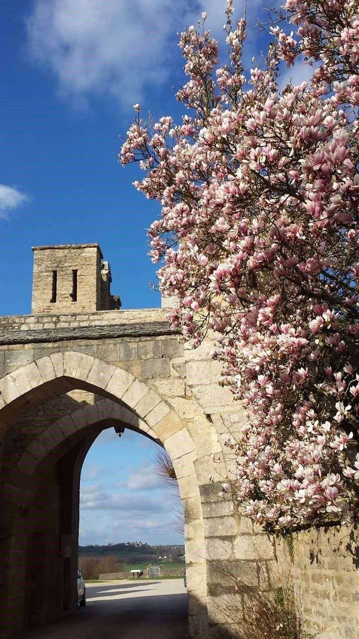 Blossom Montreal arch