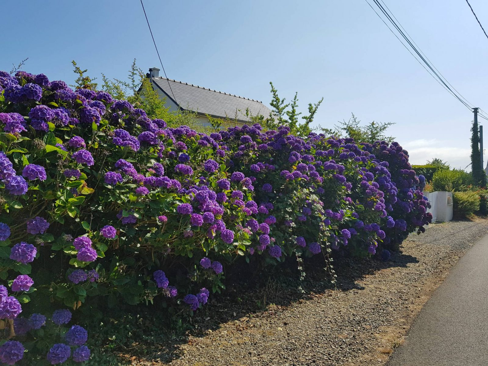 A wonderful week in Brittany + Sunday Reflections link up, purple hydrangeas