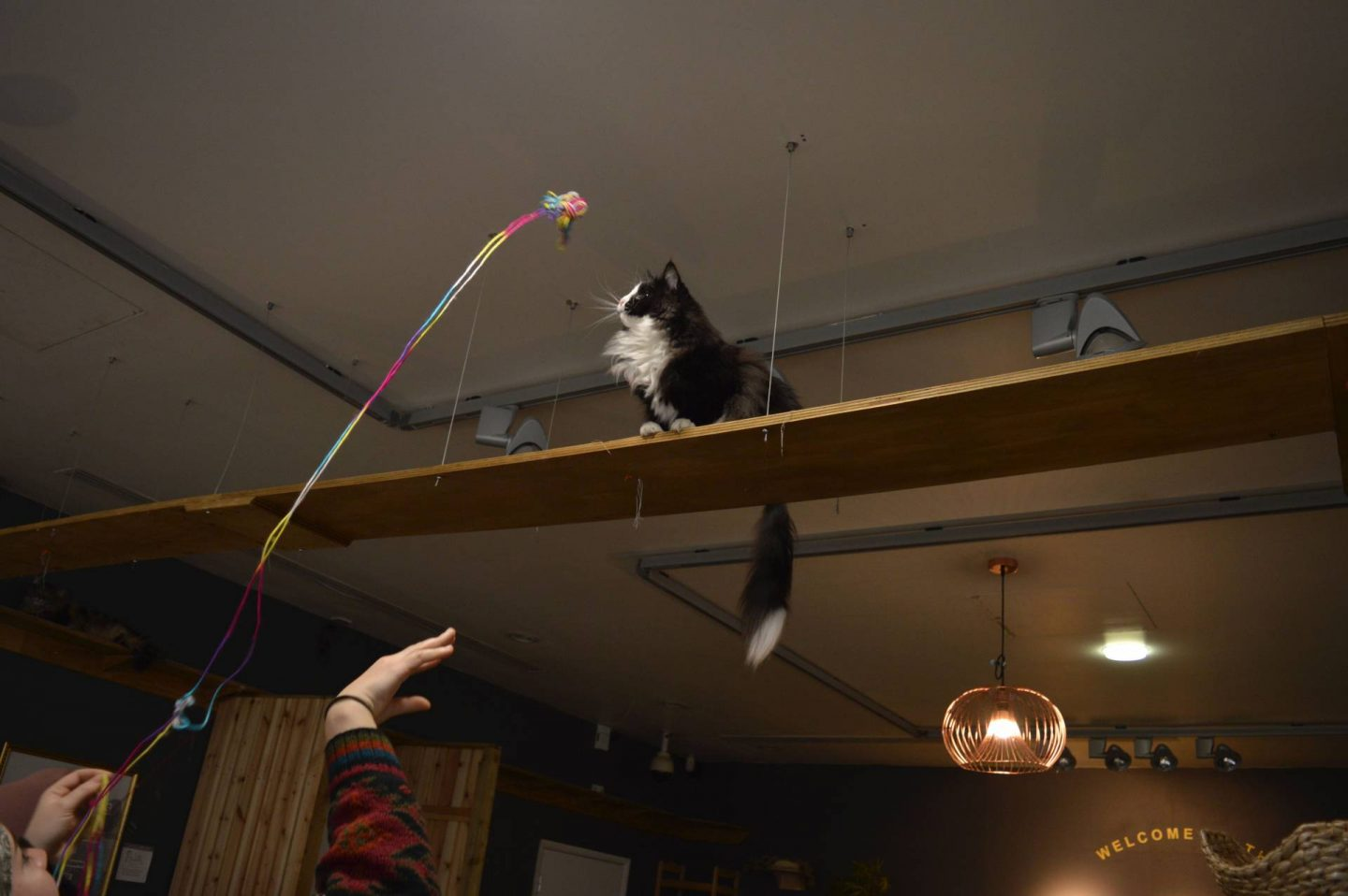 Manchester Cat Cafe