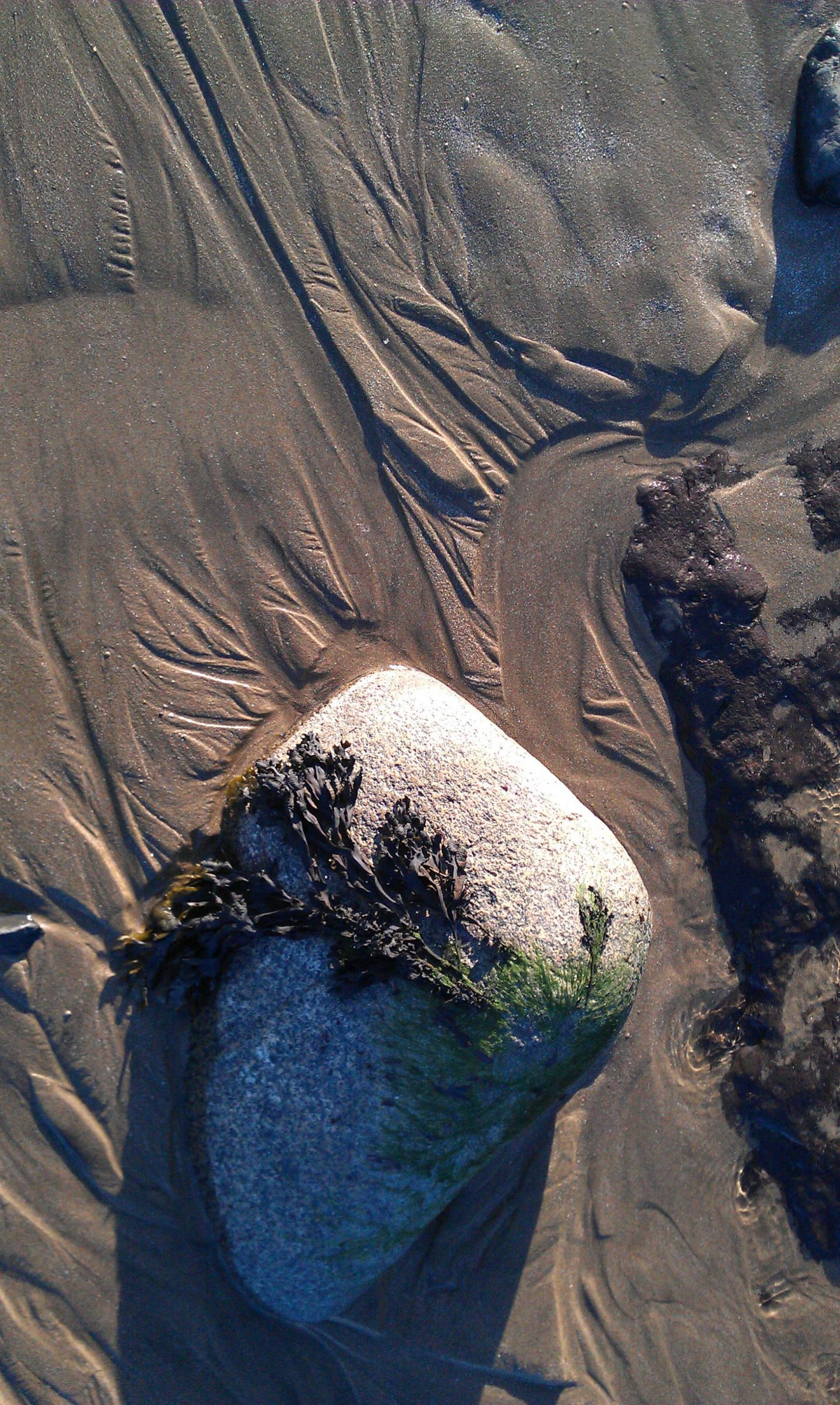 stone and seaweed in the sand