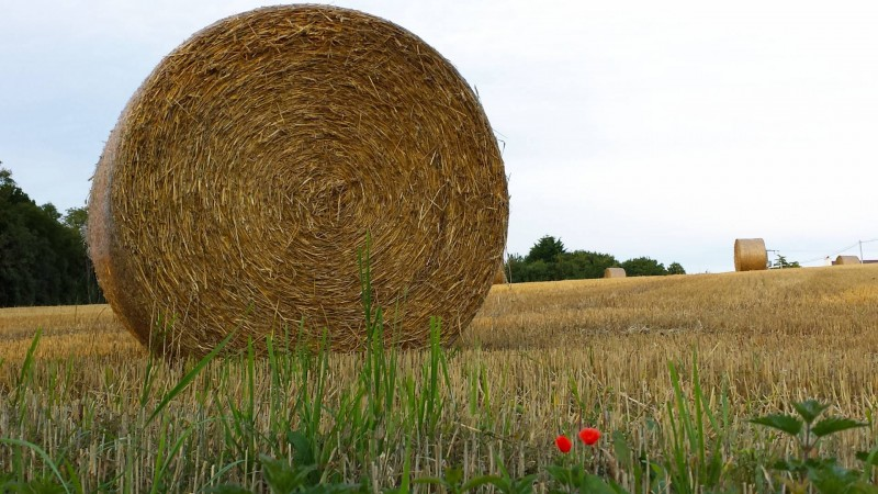Hay bales and poppies in Brittany