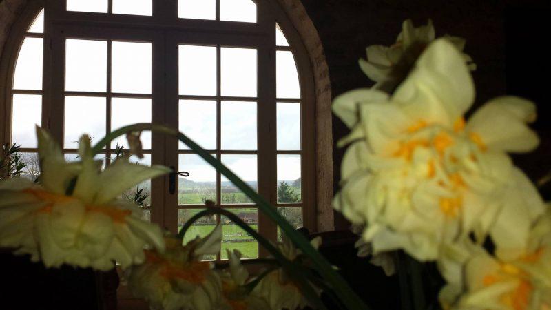 Maison Creme Anglaise daffodils