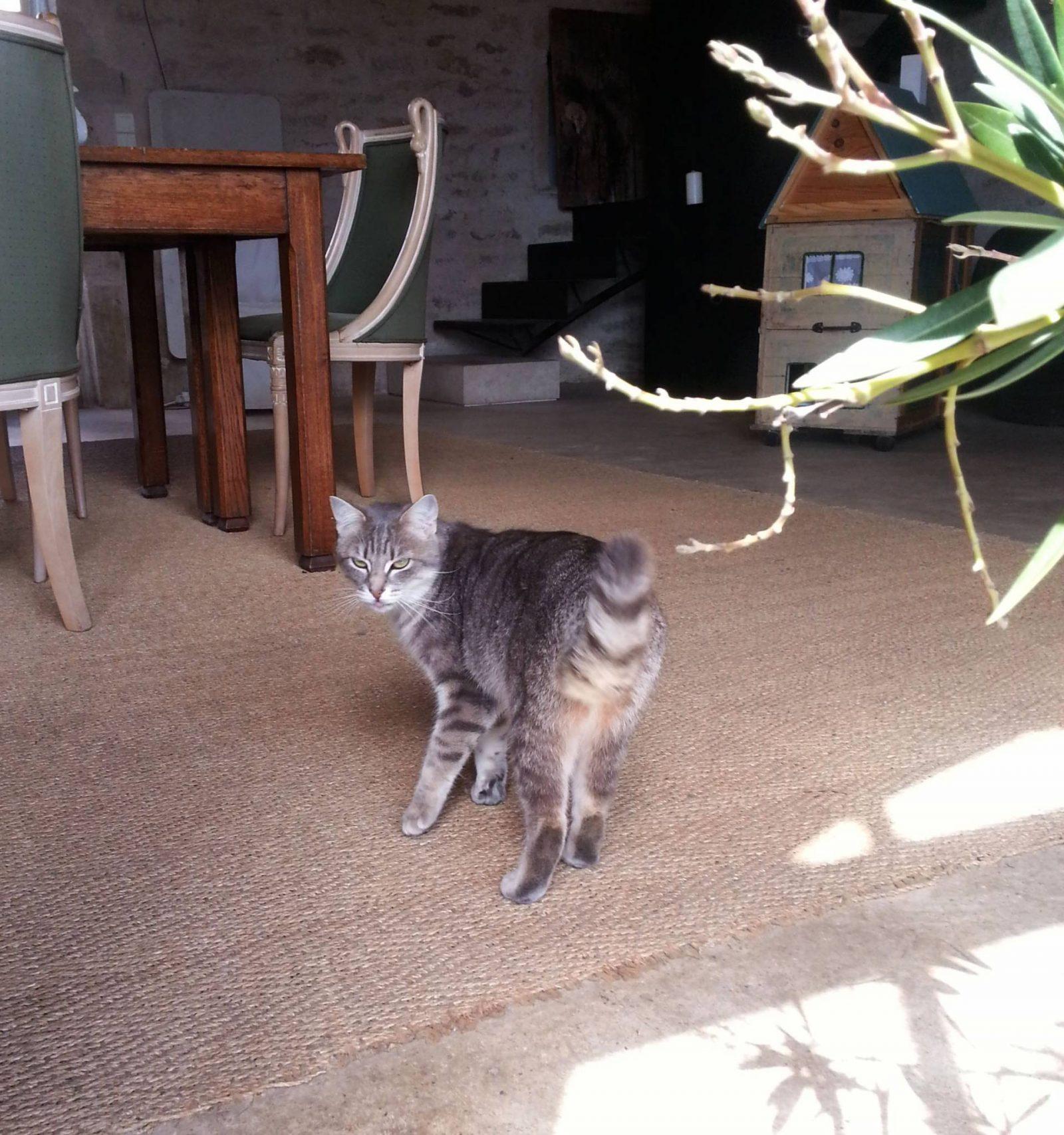 Rhubard the cat