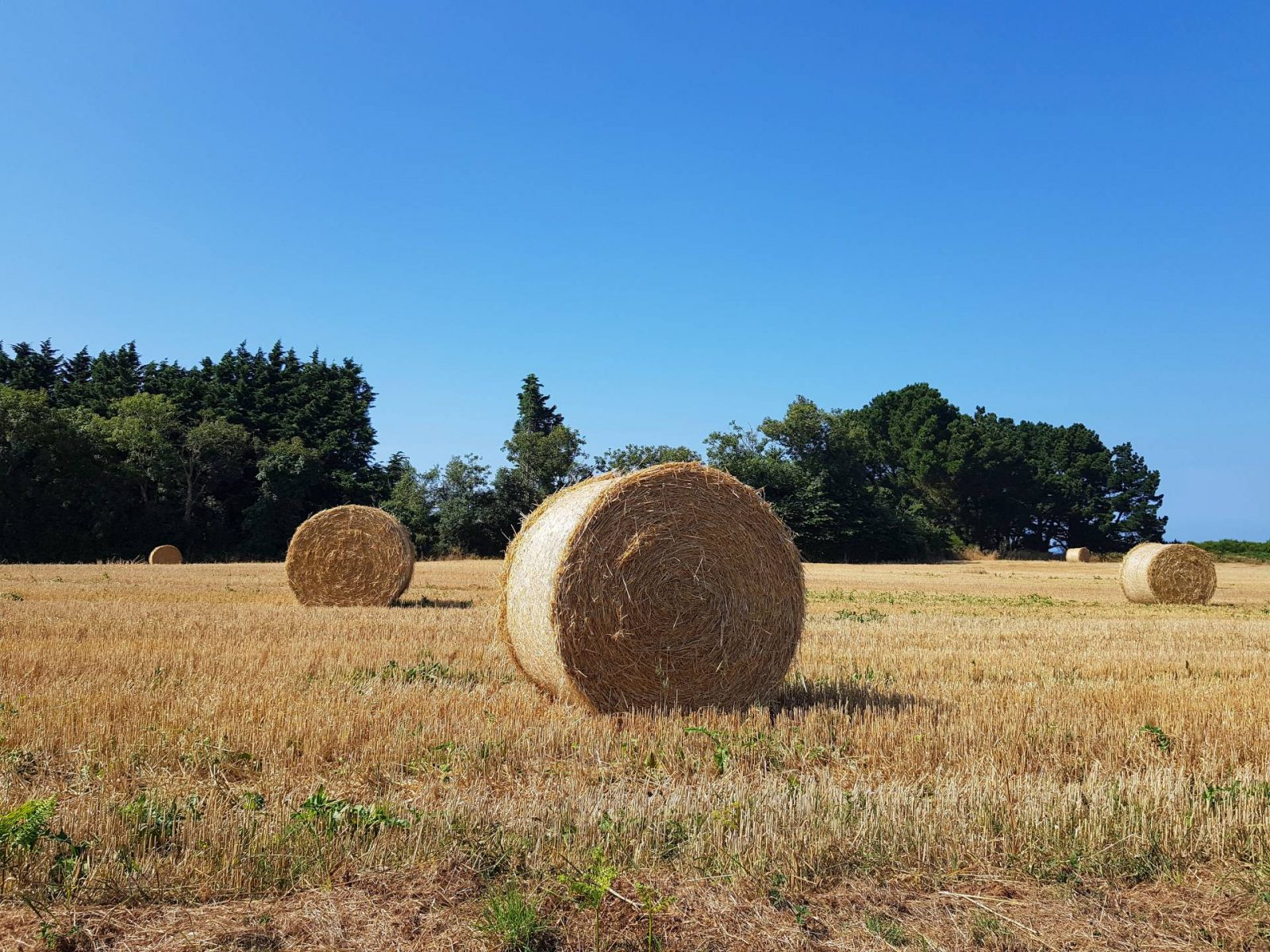 A wonderful week in Brittany + Sunday Reflections link up, hay bales