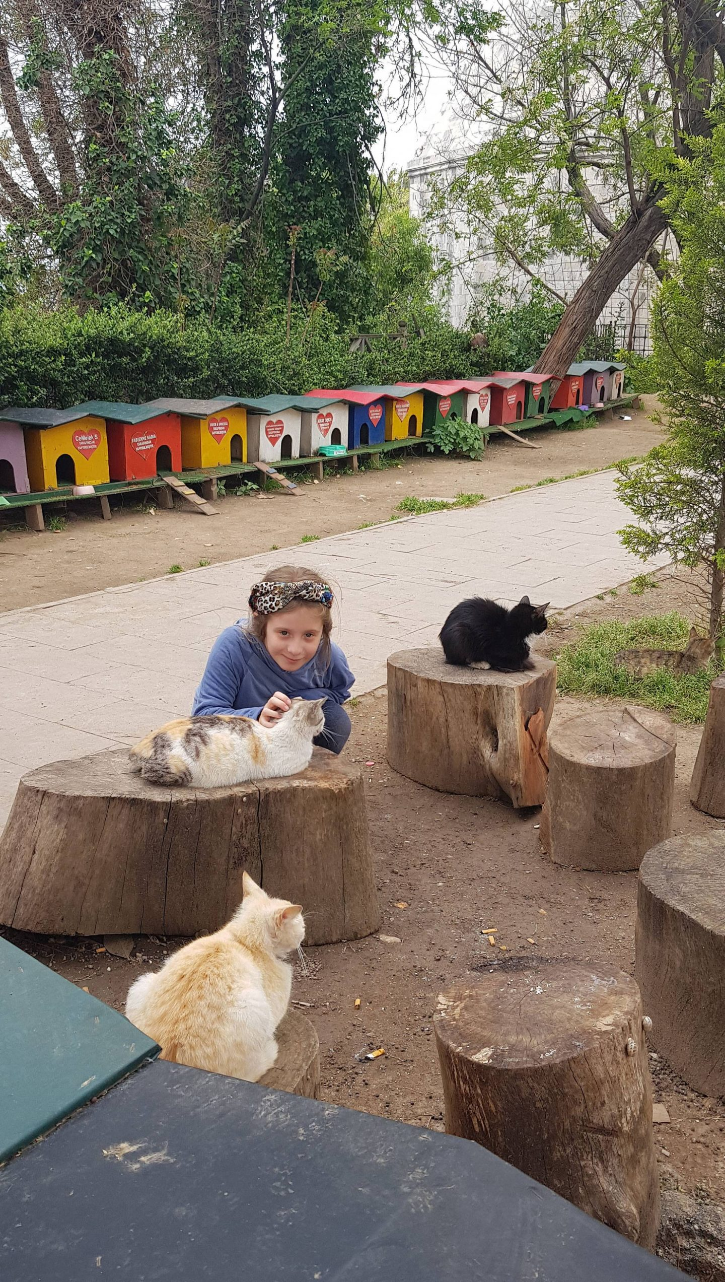 Antalya cat village