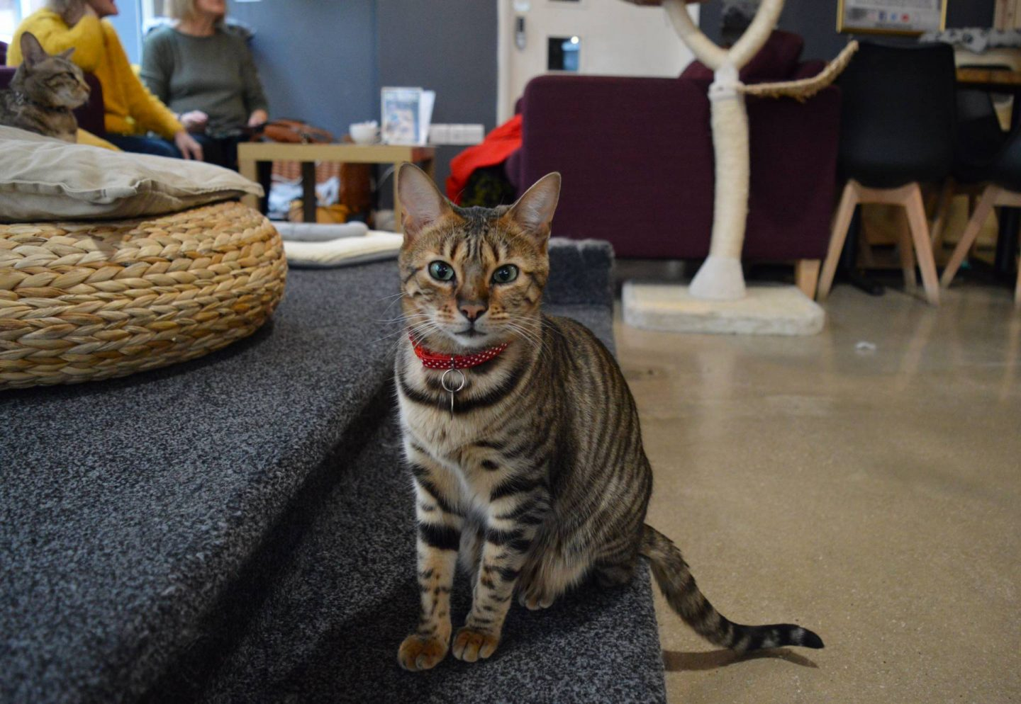 Exploring Manchester's Northern Quarter, Manchester Cat Cafe